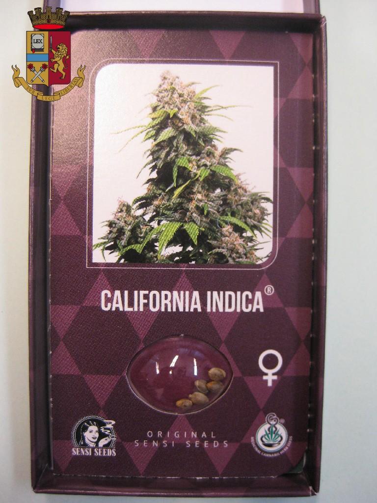 Piantine di marijuana sul davanzale della finestra: la Polizia di ...