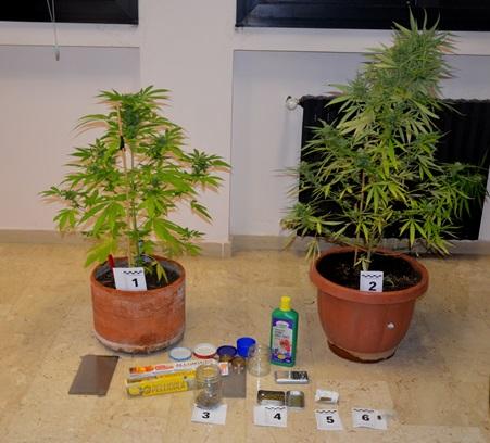 La polizia arresta due fratelli che coltivavano sul - Fratelli ingegnoli piante ...