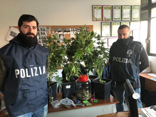Piante di Marijuana Sequestrate dal Commissariato di Rifredi