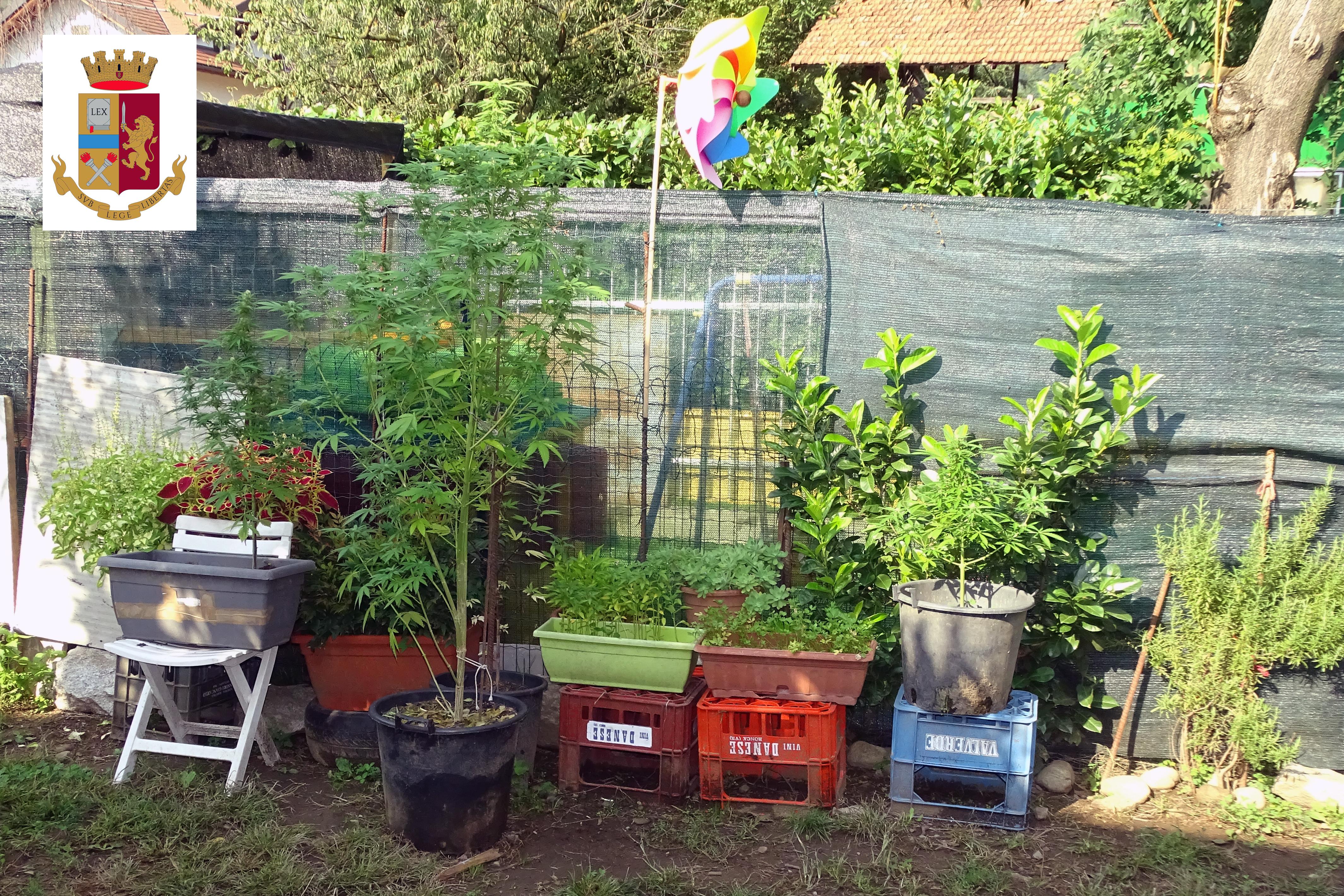 Come Recintare Un Giardino cannabis in giardino